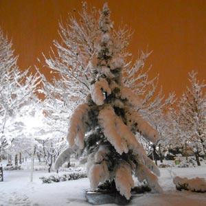 گزارش تصویری بارش برف 14 و 15 بهمن در مشهد