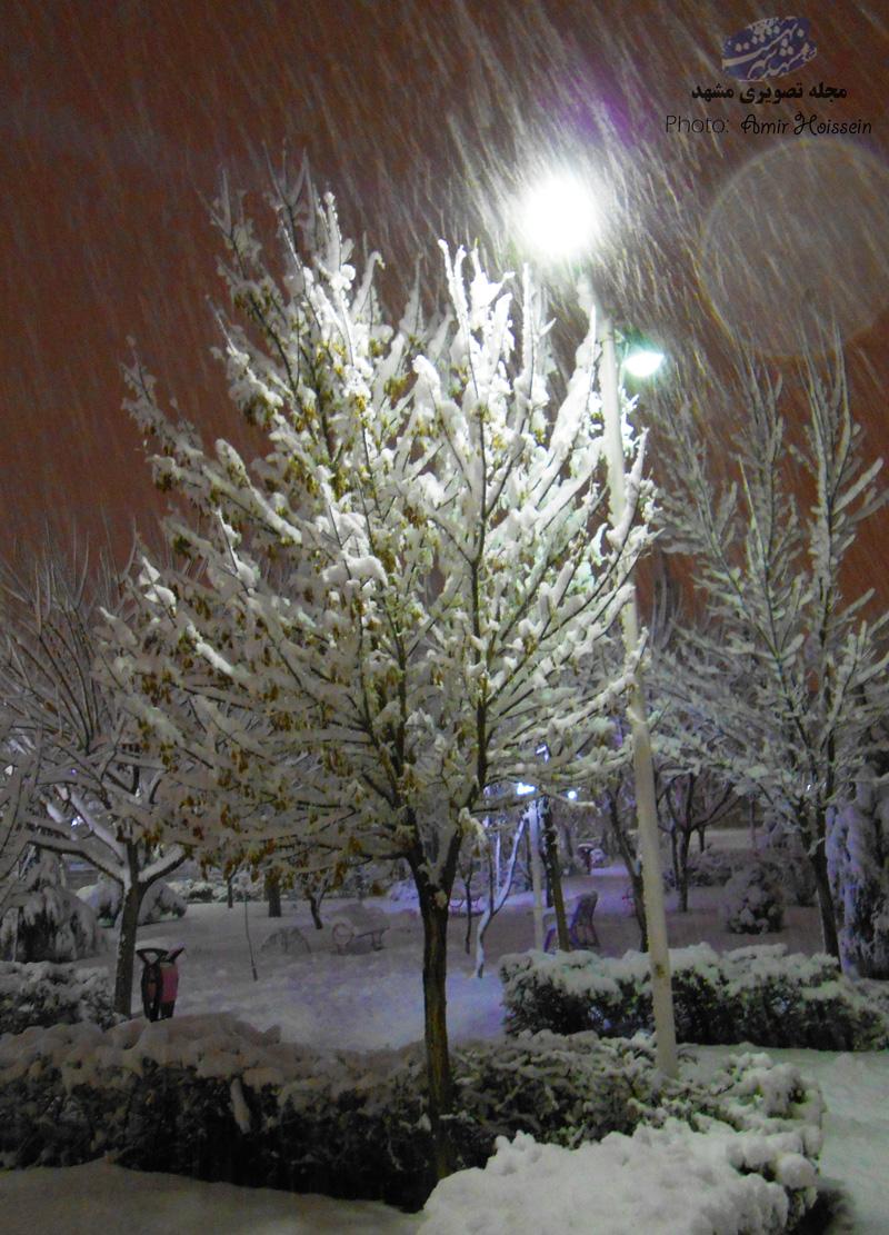 درخت برفی شب برفی