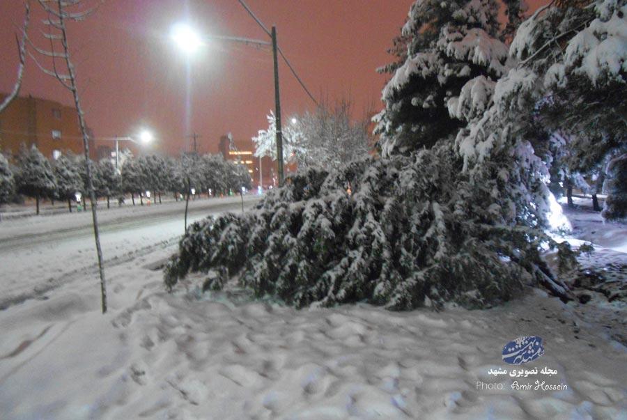 شکسته شدن درختان در طوفان برف مشهد