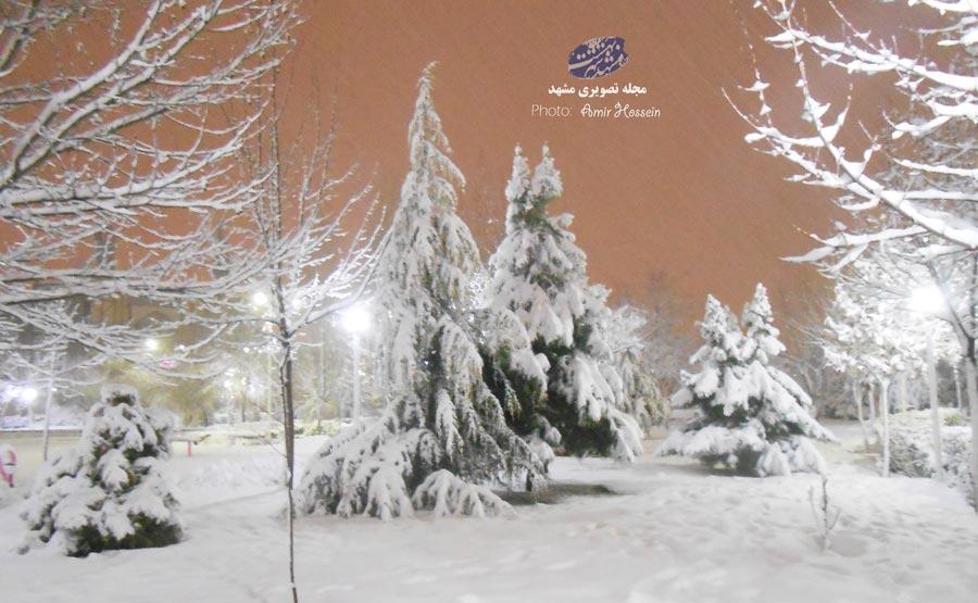 شب برفی در بوستان نیایش