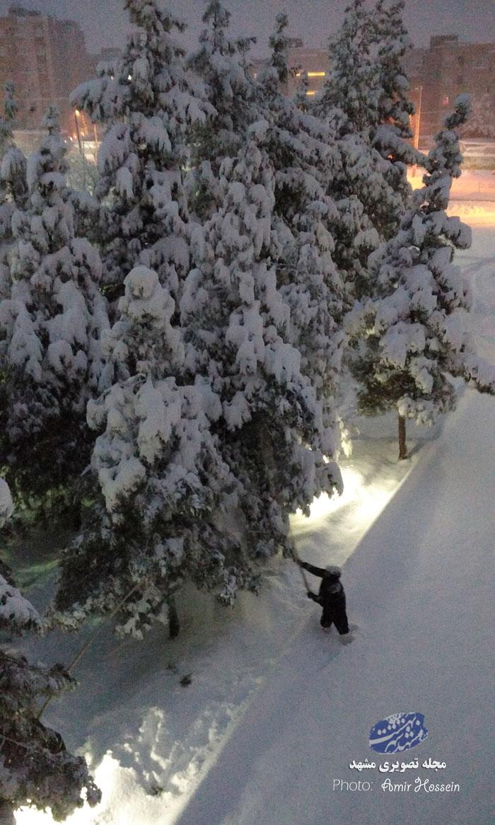 تکاندن درختان از برف سنگین مشهد